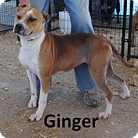 Adopt A Pet :: Ginger - Leslie, AR