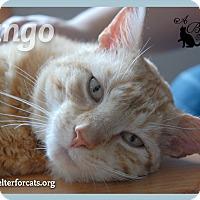 Adopt A Pet :: Jango - Winchendon, MA