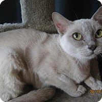 Adopt A Pet :: Platinum Elite - Glendale, AZ