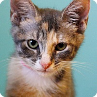 Adopt A Pet :: Maple (in CT) - Manchester, CT