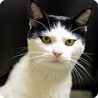 Adopt A Pet :: Taffy - Versailles, KY