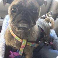 Adopt A Pet :: Charlotte - Gardena, CA
