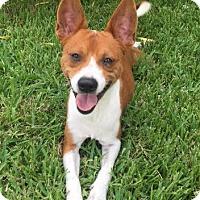 Adopt A Pet :: A397812 Buddy - San Antonio, TX