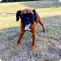 Adopt A Pet :: Oskar (rbf) - Harrisonburg, VA