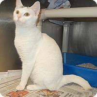 Adopt A Pet :: Baby - Newport, NC