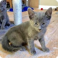 Adopt A Pet :: Artorious - Sterling Heights, MI