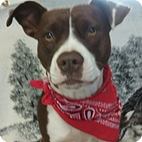 Adopt A Pet :: Lucy HOLIDAY SPECIAL $200 - Allentown, PA