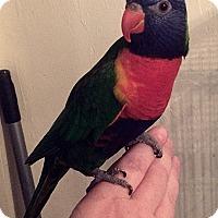 Adopt A Pet :: Fiji - Tampa, FL