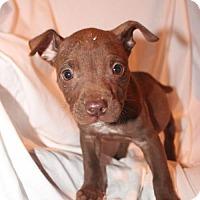 Adopt A Pet :: Kennedy - Gilbertsville, PA