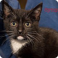 Adopt A Pet :: Symphony - San Juan Capistrano, CA