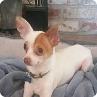 Adopt A Pet :: Axel - Vacaville, CA
