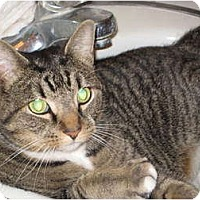 Adopt A Pet :: Marcus (KL) - Little Falls, NJ