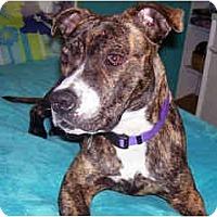 Adopt A Pet :: Jada - Scottsdale, AZ