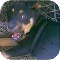 Adopt A Pet :: Emma - dewey, AZ