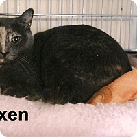 Adopt A Pet :: Vixen - Medway, MA