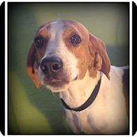 Adopt A Pet :: Dixie - Indian Trail, NC