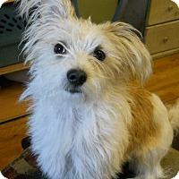 Adopt A Pet :: Smitty - dewey, AZ