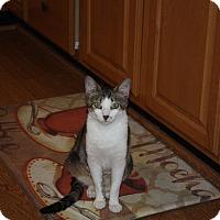 Adopt A Pet :: Sullivan - St. Louis, MO