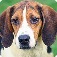 Adopt A Pet :: Pacey*ADOPTED!* - Chicago, IL
