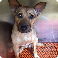 Adopt A Pet :: Bubba - Ft. Lauderdale, FL