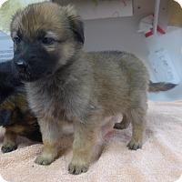 Adopt A Pet :: Chloe - Manning, SC