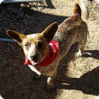 Adopt A Pet :: Pepper - Baileyton, AL