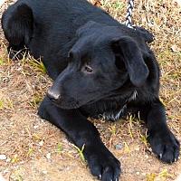 Adopt A Pet :: Gator - Brunswick, ME