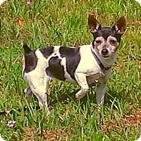 Adopt A Pet :: Brigette and Brandy - Terra Ceia, FL