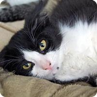 Adopt A Pet :: Magic Head - Bradenton, FL