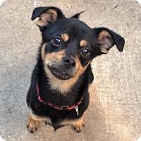 Adopt A Pet :: Stout - Buffalo, NY