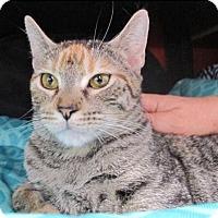 Adopt A Pet :: Kayla: Loving and Lovely - Brooklyn, NY
