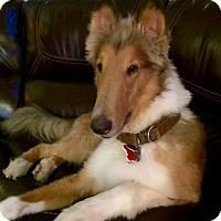 Adopt A Pet :: Dakota *New* Three years old - Stafford, TX