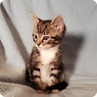 Adopt A Pet :: Strawberry - Templeton, MA