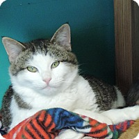Adopt A Pet :: Rolf - Brookings, SD