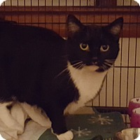 Adopt A Pet :: Shadow - Aurora, IL