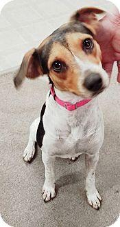 Hound (Unknown Type) Mix Dog for adoption in Laingsburg, Michigan - Izzie