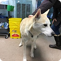 Adopt A Pet :: Cloe at Madison Hts - Warren, MI