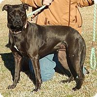 Adopt A Pet :: Athena - Newport, NC