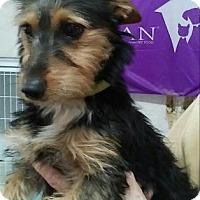 Adopt A Pet :: Izzy - Centerville, GA