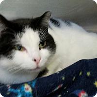 Adopt A Pet :: Shayna - Elyria, OH
