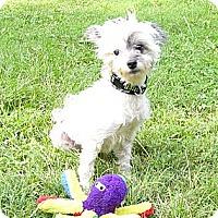 Adopt A Pet :: Chyna - Mocksville, NC