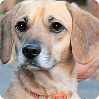 Adopt A Pet :: TANNER(LOVES HIS FAMILY!!) - Wakefield, RI