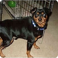 Adopt A Pet :: Perry - Phoenix, AZ