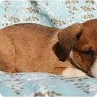 Adopt A Pet :: Binks - Richmond, VA