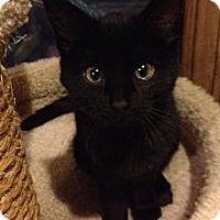 Adopt A Pet :: Highway - Byron Center, MI