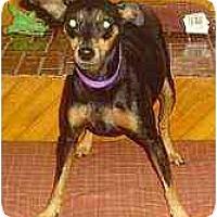 Adopt A Pet :: Cuda - Florissant, MO