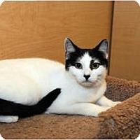 Adopt A Pet :: Cassidy - Farmingdale, NY