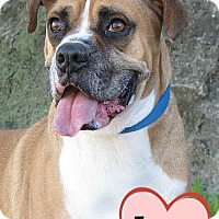 Adopt A Pet :: A301264 Trooper - San Antonio, TX