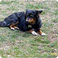 Adopt A Pet :: Tucker - Lincolndale, NY