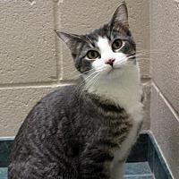 Adopt A Pet :: Bennett - Lima, OH